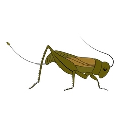 Insect cute cartoon grasshopper vector