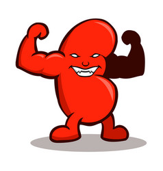 Strong kidney vector