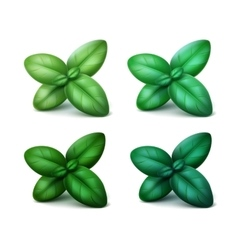 Set of green basil leaves isolated on background vector