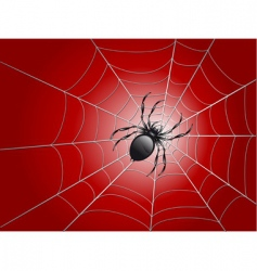 spider on wed vector image