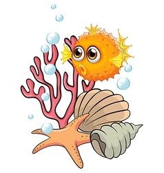 An orange puffer fish near the seashells vector image vector image