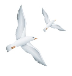 Flying seagulls birds vector