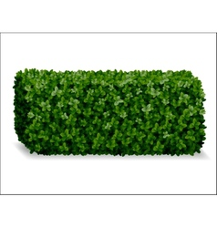 Boxwood decorative fence vector