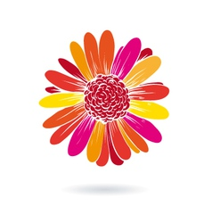 Gerber flower isolated on a white backgrounds vector image vector image