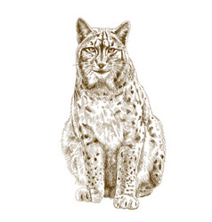 engraving of lynx vector image
