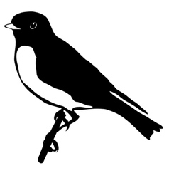 Black silhouette of bluebird vector