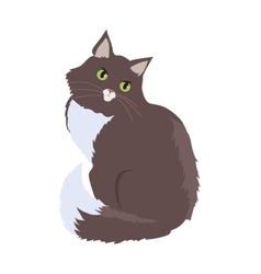 Siberian cat flat design vector