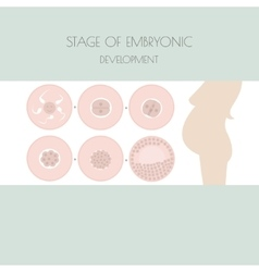 Stages of development of the child in the womb vector image