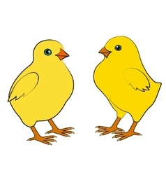 Two small chicken vector image