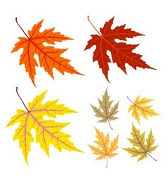 Yellow and red autumn leaf vector image