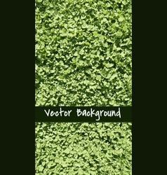 Grassbackground vector