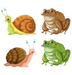 frogs and snails on white background vector image vector image