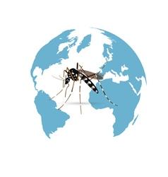 Zika Virus vector image vector image
