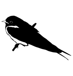Black silhouette of swallow vector
