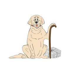 Labrador aged dog breed vintage vector