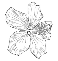 hibiscus line two vector image
