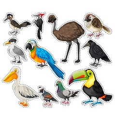 Sticker set with many birds vector image
