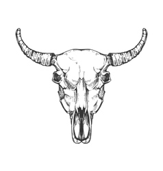 Vintage buffalo skull sketch Bull animal vector image
