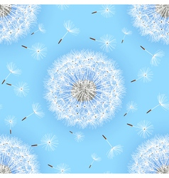 Seamless pattern blue with flowers dandelions vector image vector image