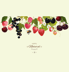 Berry border vector