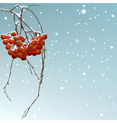 The winter background thread rowan vector image