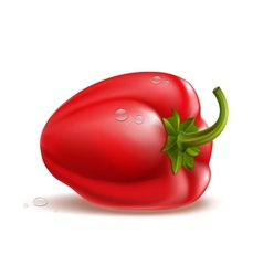 Pepper vector image