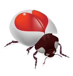 red heart bug vector image vector image