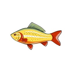 Fish fishing river vector