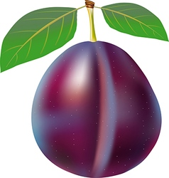 Plum with stem and green leaf vector
