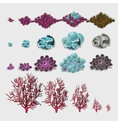 Big set of corals and underwater plants for design vector