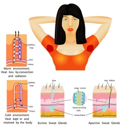 Armpit sweat vector image