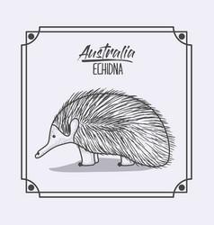 Australia echidna in frame and monochrome vector