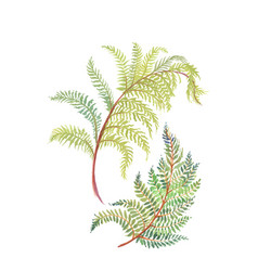 Hand drawn painting with colorful branches of fern vector