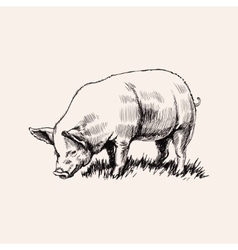 Hand Drawn Sketch Pig vector image vector image