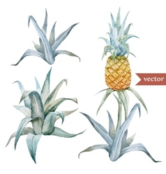 watercolor tropical pineapple exotic pattern vector image vector image