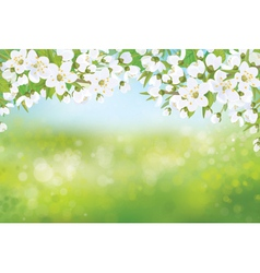 Spring tree blossoming vector