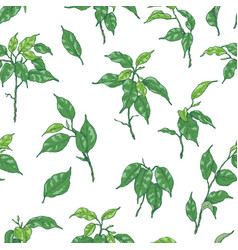 hand drawn ficus branch pattern vector image vector image