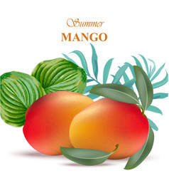 mango fruit with green leaves vector image