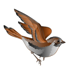 Little bird cub sparrow passer domesticus in flig vector image