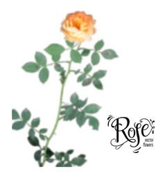 Blur rose element vector