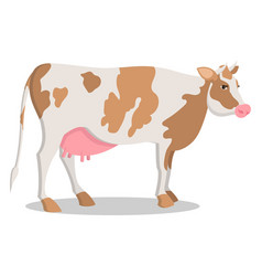 cute cow grown on farm isolated cartoon vector image