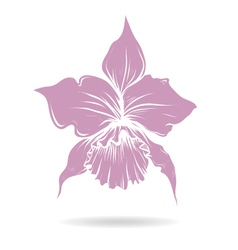 Hand drawn lilly flower purple vector