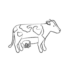 Isolated cow design vector