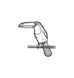 toucan hand drawn sketch icon vector image vector image