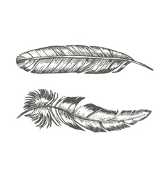 Feathers Set Hand Draw Sketch Trendy Tattoo vector image