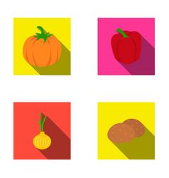 yellow pumpkin sweet red pepper onion bitter vector image