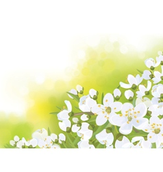 Spring tree blossom flowers vector