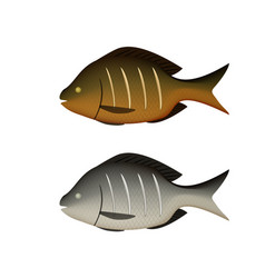 Boiled and fried fish on white in 3d vector