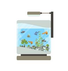cartoon home aquarium with vector image