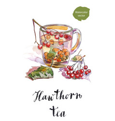 Cup of hawthorn tea with green leaves vector